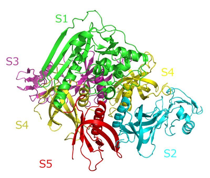 800px-Pertussis_toxin_complex.png