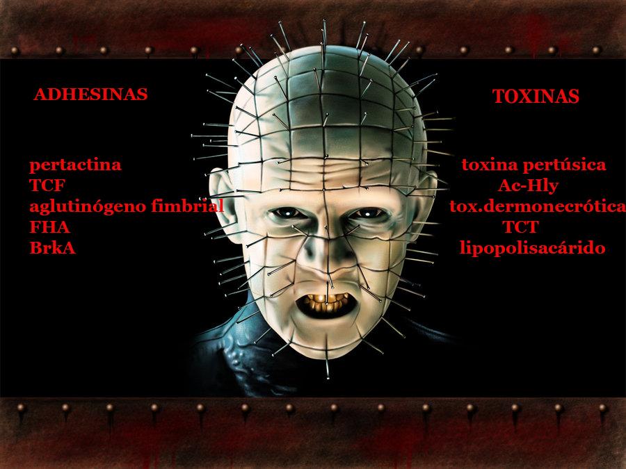 hellraiser-pinhead toxinas tosferina copia